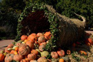 pumpkins-1004417_1920