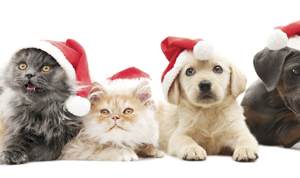 5 HOLIDAY PLANTS THAT ARE PRETTY BUT POISONOUS FOR OUR PETS