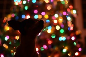6 HOLIDAY DECORATIONS — GREAT FOR TRADITION BUT NOT FOR PETS
