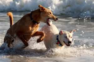 SKIN CANCER & CANINES – FIVE EASY WAYS TO PROTECT YOUR PET