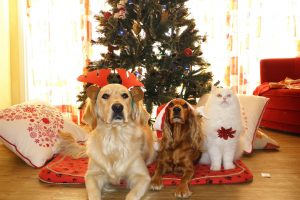 9 NAUGHTY HOLIDAY FOODS THAT ARE DEFINITE NO-NOs FOR YOUR PETS