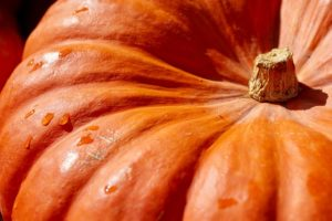 Ode to the Pumpkin: One of the Best Cancer-Fighting Foods Available